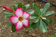 Tropische plant