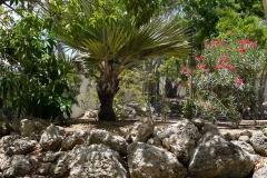 Roca volcánica en el jardín