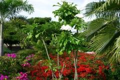 Oleander Bonaire