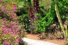 Jardín tropical