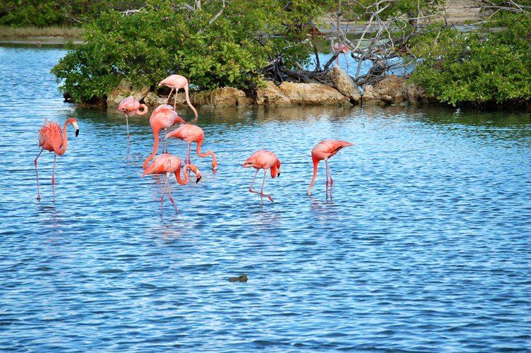 Flamingos Zoutpannen Jan Thiel